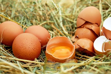 Egg is one of the common allergens